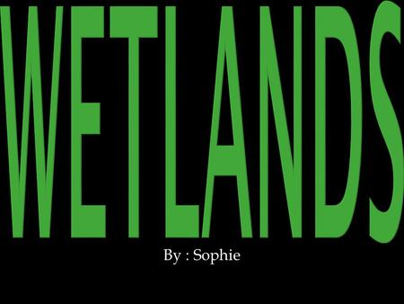 By : Sophie. Wetlands are : Marshes, Swamps, Bogs, Rivers, Streams, Lakes, Riparian's, and many more.