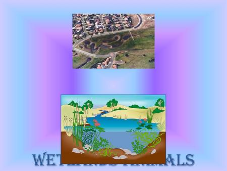 Wetlands animals. Ducks Name of animals: Ducks Ducks habitat: Wetlands, rivers, streams and ponds Consumer: Ducks common food is fish and fish eggs. They.