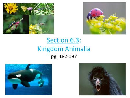 Section 6.3: Kingdom Animalia pg. 182-197. Part 1: Invertebrates.