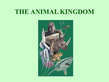 THE ANIMAL KINGDOM.