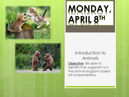 Introduction to Animals Objective : Be able to identify if an organism is in the animal kingdom based off characteristics.