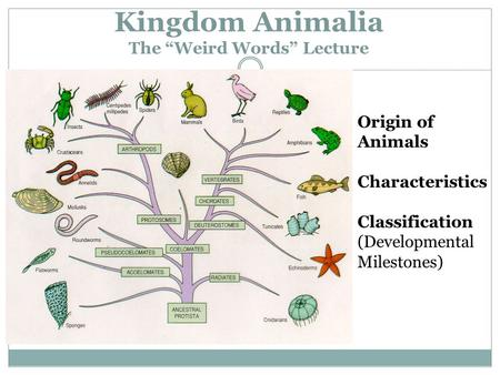 "Kingdom Animalia The ""Weird Words"" Lecture"