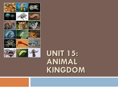 UNIT 15: ANIMAL KINGDOM. What characteristics are common to all animals?  Eukaryotic cells  NO cell wall  Multicellular  Cell specialization  Heterotrophic.