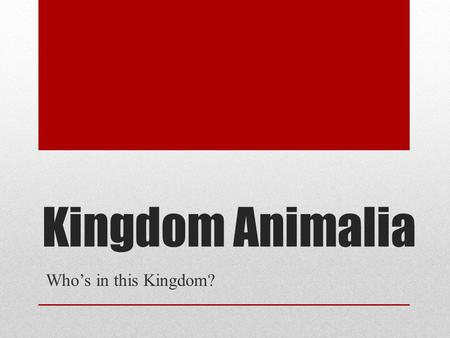 Kingdom Animalia Who's in this Kingdom?. Animal or Not?