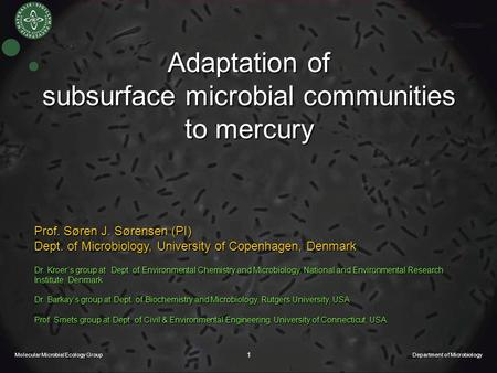 Molecular Microbial Ecology Group Department of Microbiology 1 Adaptation of subsurface microbial communities to mercury Prof. Søren J. Sørensen (PI)