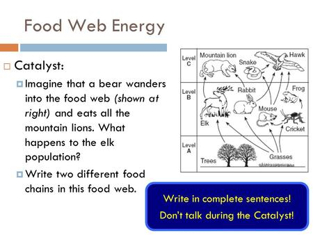 Food Web Energy  Catalyst:  Imagine that a bear wanders into the food web (shown at right) and eats all the mountain lions. What happens to the elk population?