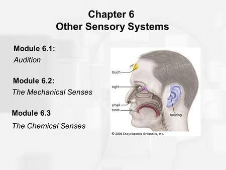 Chapter 6 Other Sensory Systems
