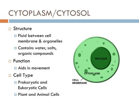 CYTOPLASM/CYTOSOL  Structure  Fluid between cell membrane & organelles  Contains water, salts, organic compounds  Function  Aids in movement  Cell.