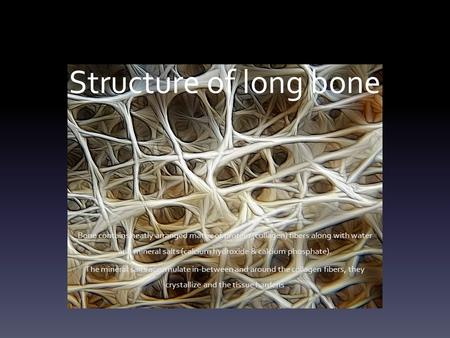 Structure of long bone Bone contains neatly arranged matrix of protein (collagen) fibers along with water and mineral salts (calcium hydroxide & calcium.