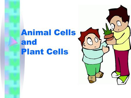 Animal Cells and Plant Cells