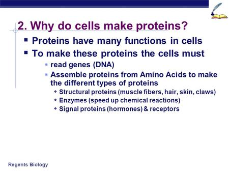 2. Why do cells make proteins?