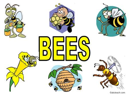 ©abcteach.com. Bees make honey. ©abcteach.com Many different types of bees work together to build a hive. ©abcteach.com.