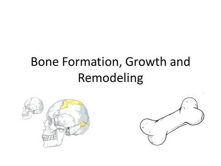 Bone Formation, Growth and Remodeling. Bone formation The Skeleton is formed from two of the strongest and most supportive tissues in the body: Cartilage.
