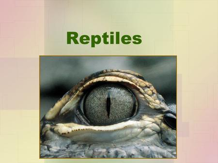 "Reptiles. Adapted for Life On Land Ectothermic –All reptiles are ectotherms meaning ""cold-blooded."" –THINK! – How do cold-blooded animals maintain their."
