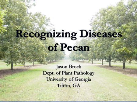 Recognizing Diseases of Pecan