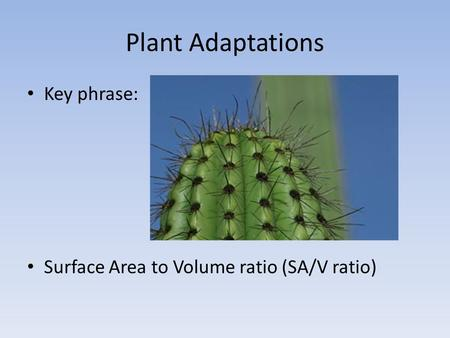 Plant Adaptations Key phrase: Surface Area to Volume ratio (SA/V ratio)