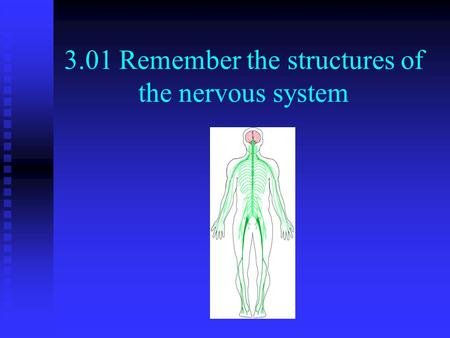 3.01 Remember the structures of the nervous system.