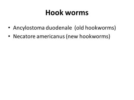 Hook worms Ancylostoma duodenale (old hookworms)
