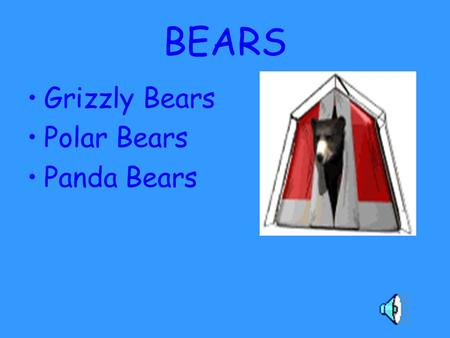 BEARS Grizzly Bears Polar Bears Panda Bears. Grizzly Bears...eat over a hundred different types of plants, many species of insects, fish, ground squirrels,