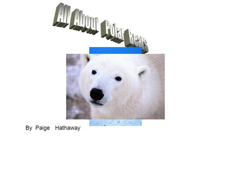 By Paige Hathaway. Around Polar Bears Polar Bears live at the top of the planet. Polar Bears in the top of the cold. Polar Bears live on ice. Polar Bears.