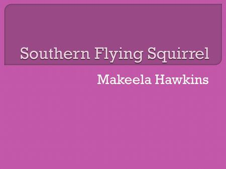 Makeela Hawkins.  The southern flying squirrel is usually found in hammocks or swamps in Florida.  It is also found in the trees.  It is found in South.