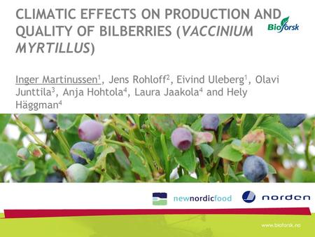 CLIMATIC EFFECTS ON PRODUCTION AND QUALITY OF BILBERRIES (VACCINIUM MYRTILLUS) Inger Martinussen 1, Jens Rohloff 2, Eivind Uleberg 1, Olavi Junttila 3,