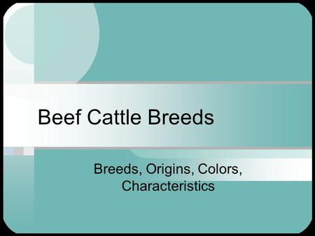 Beef Cattle Breeds Breeds, Origins, Colors, Characteristics.