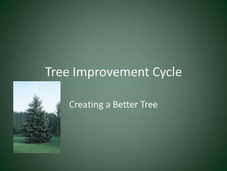 Tree Improvement Cycle Creating a Better Tree. Tree Improvement Application of knowledge to produce superior trees Improvement can be made in: -Trees'