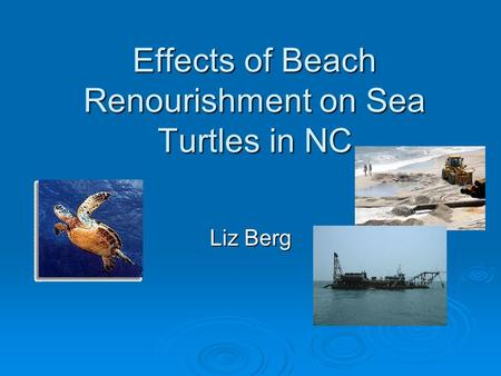 Effects of Beach Renourishment on Sea Turtles in NC Liz Berg.