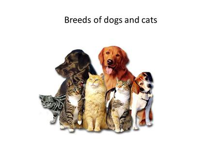Breeds of dogs and cats. Dogs have lived with humans for thousands of years. Cats have been seen in ancient sketches from China to Egypt.