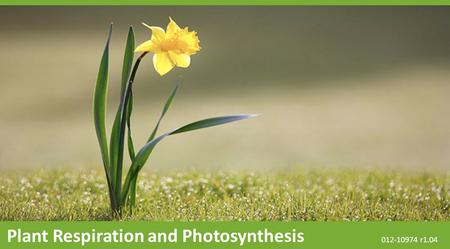 Plant Respiration and Photosynthesis 012-10974 r1.04.