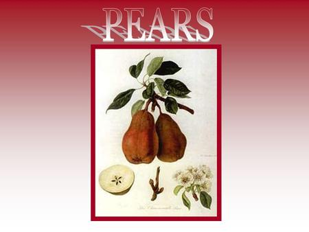 Pears are members of the rose family and are related to the apple and quince. Pears generally have a large round bottom that tapers toward the top. Their.
