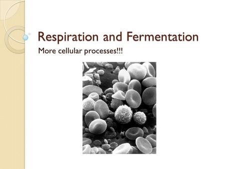 Respiration and Fermentation More cellular processes!!!
