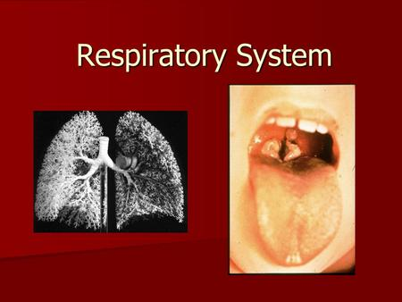 Respiratory System. Which lung is bigger? Why is it bigger? Which lung is bigger? Why is it bigger? Why does breathing in cold air hurt? Why does breathing.