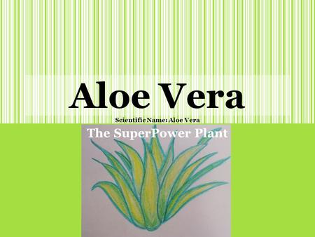 Aloe Vera Scientific Name: Aloe Vera The SuperPower Plant.