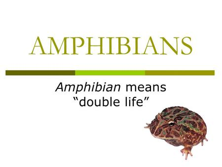 "AMPHIBIANS Amphibian means ""double life"". CLASSIFICATION  Eukaryote Domain Animal Kingdom  Phylum Chordata (vertebrates)  CLASS: FISH, AMPHIBIANS,"