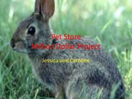 Pet Store Million Dollar Project Jessica and Caroline.