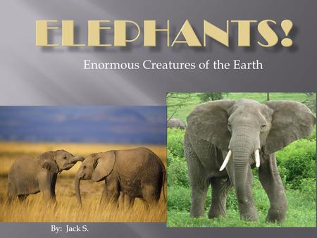 Enormous Creatures of the Earth