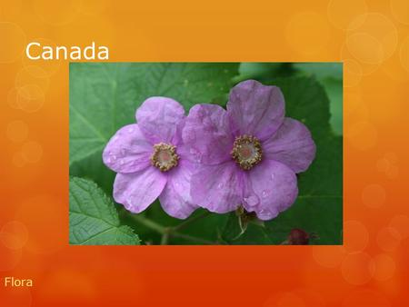 Canada Flora. In Canada we have amazing flora these are some examples.