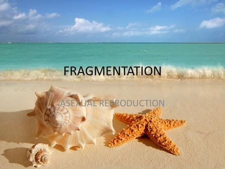 FRAGMENTATION ASEXUAL REPRODUCTION. Pieces from the parent break off and form a new organism identical to the original parent.