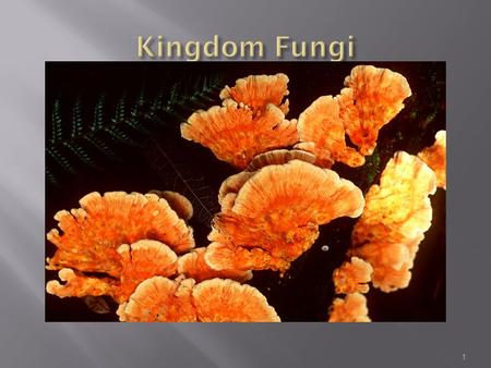 1.  Mushrooms, toadstools, mildews, yeasts and moulds are all members of this kingdom.  Some unicellular fungi, but most are multicellular.  Look similar.