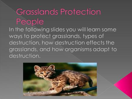 Grasslands Protection People