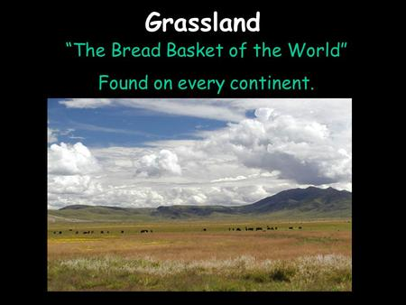 "Grassland ""The Bread Basket of the World"" Found on every continent."