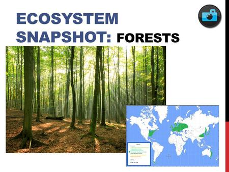 ECOSYSTEM SNAPSHOT: FORESTS. FEATURED POPULATION: EASTERN BOX TURTLE.