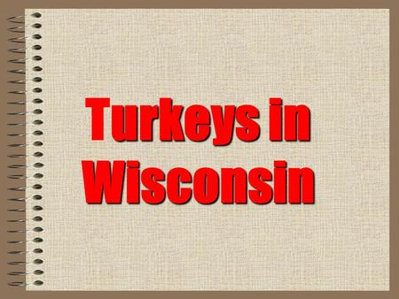 "Urkeys in Wisconsin Turkeys in Wisconsin. Description Wisconsin's largest game bird Ave. length Males are 48"" & females 36"" Weight males 18-25 lbs.."