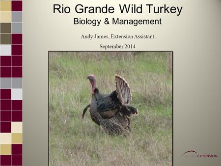 Rio Grande Wild Turkey Biology & Management Andy James, Extension Assistant September 2014.