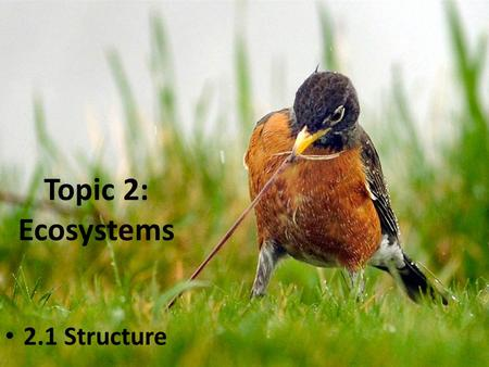Topic 2: <strong>Ecosystems</strong> 2.1 Structure. Ecology ‣ Ecology is the study of the relationships between organisms <strong>and</strong> their physical <strong>and</strong> biotic environment: Relationships.