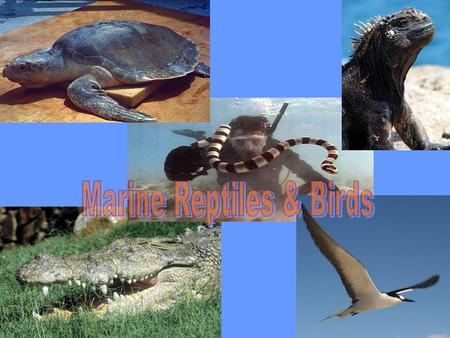 Marine Reptiles Sea turtles, sea snakes, marine lizards and salt-water crocodiles.Sea turtles, sea snakes, marine lizards and salt-water crocodiles. Tetrapods.