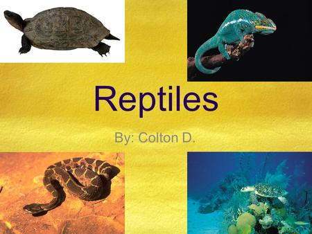 Reptiles By: Colton D..