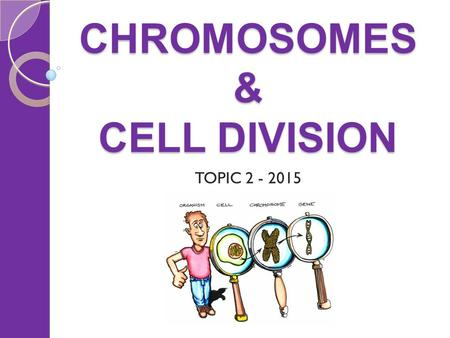 CHROMOSOMES & CELL DIVISION TOPIC 2 - 2015. CHROMOSOMES & CELL DIVISION Things to cover Chromosomes Karyotypes ◦ inc. chromosomal disorders Cell division: